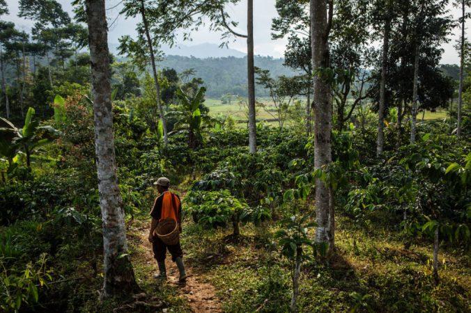 CoffeePlantation_Indonesia_CIFOR_web.jpg