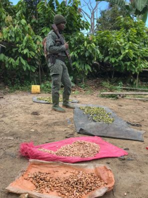 Best-Cocoa-Photos-03_SODEFOR-park-ranger-in-charge-of-Cavally-protected-area-standing-over-illegal-cocoa-found-during-a-patrol_web.jpg