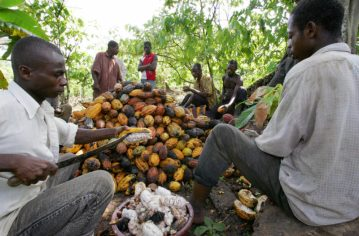 IvoryCoast_Cocoa_GettyImages-77612143_web.jpg