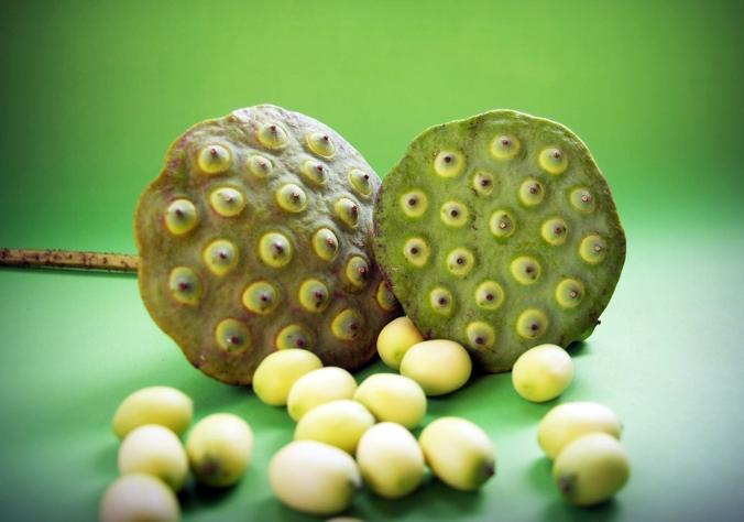 Lotus-seeds.jpg