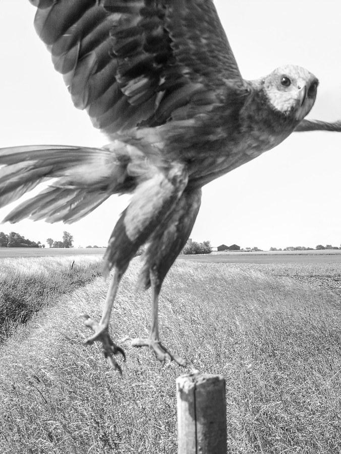 knausgaard-birds07.jpg