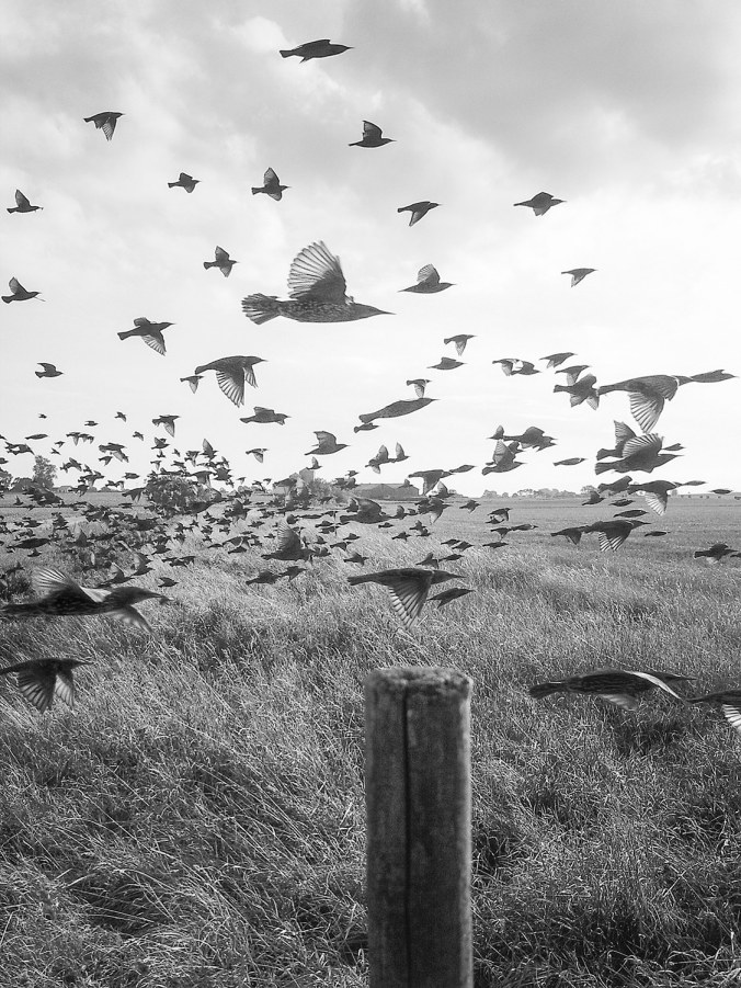 knausgaard-birds11.jpg