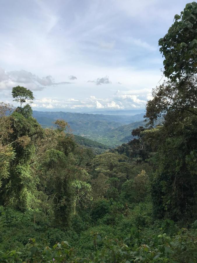 Rwanda1.jpeg