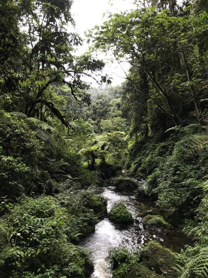 Rwanda3.jpeg