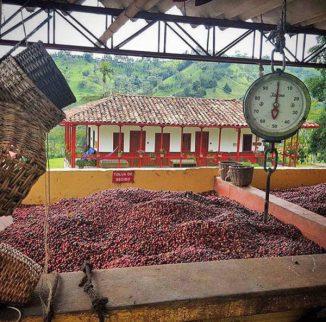 Finca-Ocaso-Farm_Tradicion-cafetera_web1000.jpg