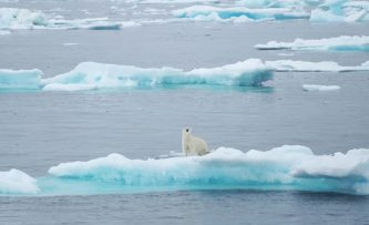 NWP-2019_polar-bears_web.jpg