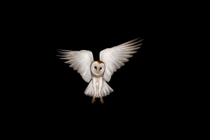 02TB-OWLS2-jumbo.jpg
