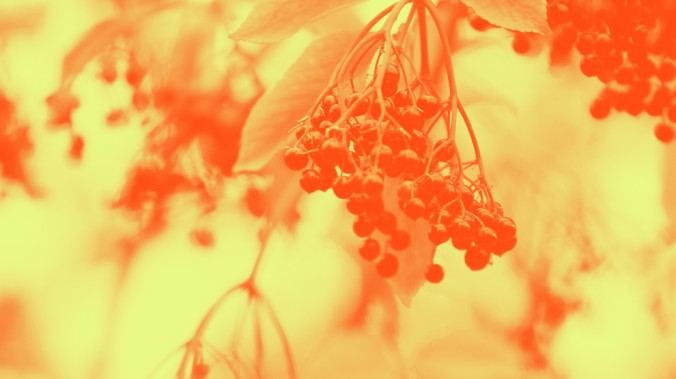 20191003_bite-elderberries_2000.jpg