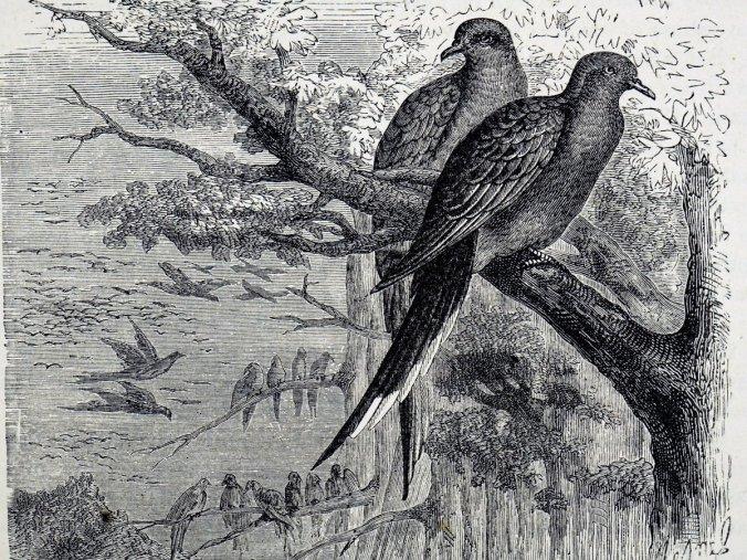 pigeons-c657267b51dd651f82752cb350a20158019d037e-s1200-c85.jpg