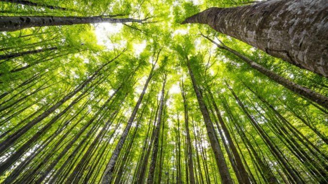 Trees_shutterstock_142702201_web.jpg