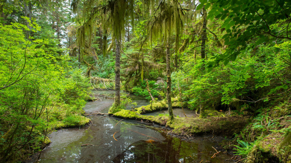 GettyImages-1176549046_Tongass-Forest_web