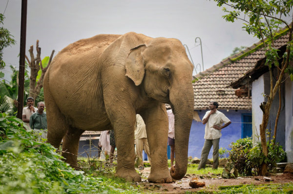 Elephants-and-people-co-exist-in-the-Western-Ghats_Sreedhar-Vijayakrishnan_web.jpg
