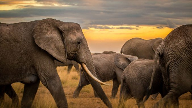 GettyImages-1091137346_elephants_web