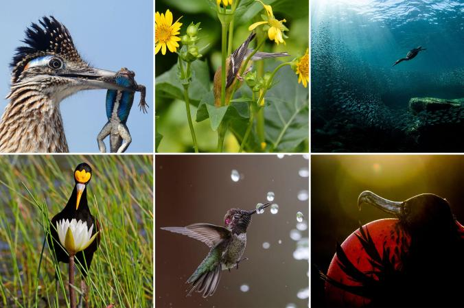 grid_web_pfb_02_natalierobertson_tennesseewarbler_plantsforbirds_highres