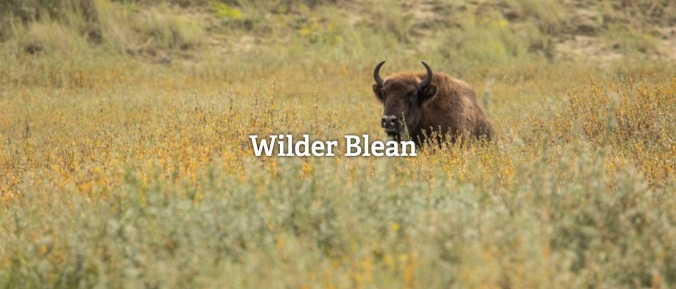 WilderBlean