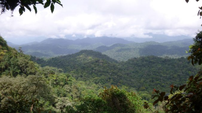Ebo-forest-view-2-ZSSD-Daniel-Mfossa_web